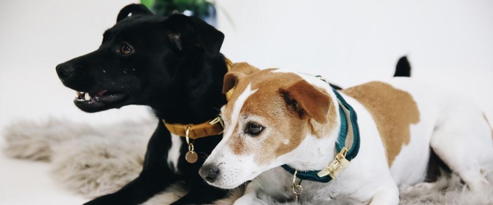 Hundehalsbänder &-Leinen