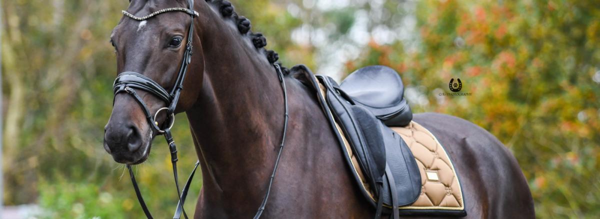 Equestrian Stockholm | Herbst & Winter 2020