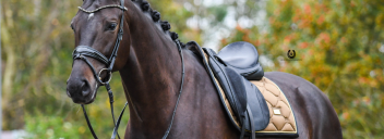 Equestrian Stockholm   Herbst & Winter 2020