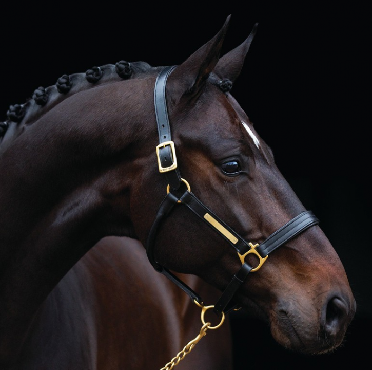 Horseware Amigo Lederhalfter Braun