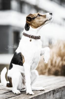 Kentucky Hundehalsband Velvet mit Lederimitat