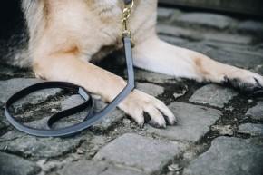Kentucky Hundeleine Loop