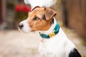 Kentucky Hundehalsband Velvet smaragd