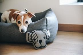 Kentucky Hundespielzeug Dog Head